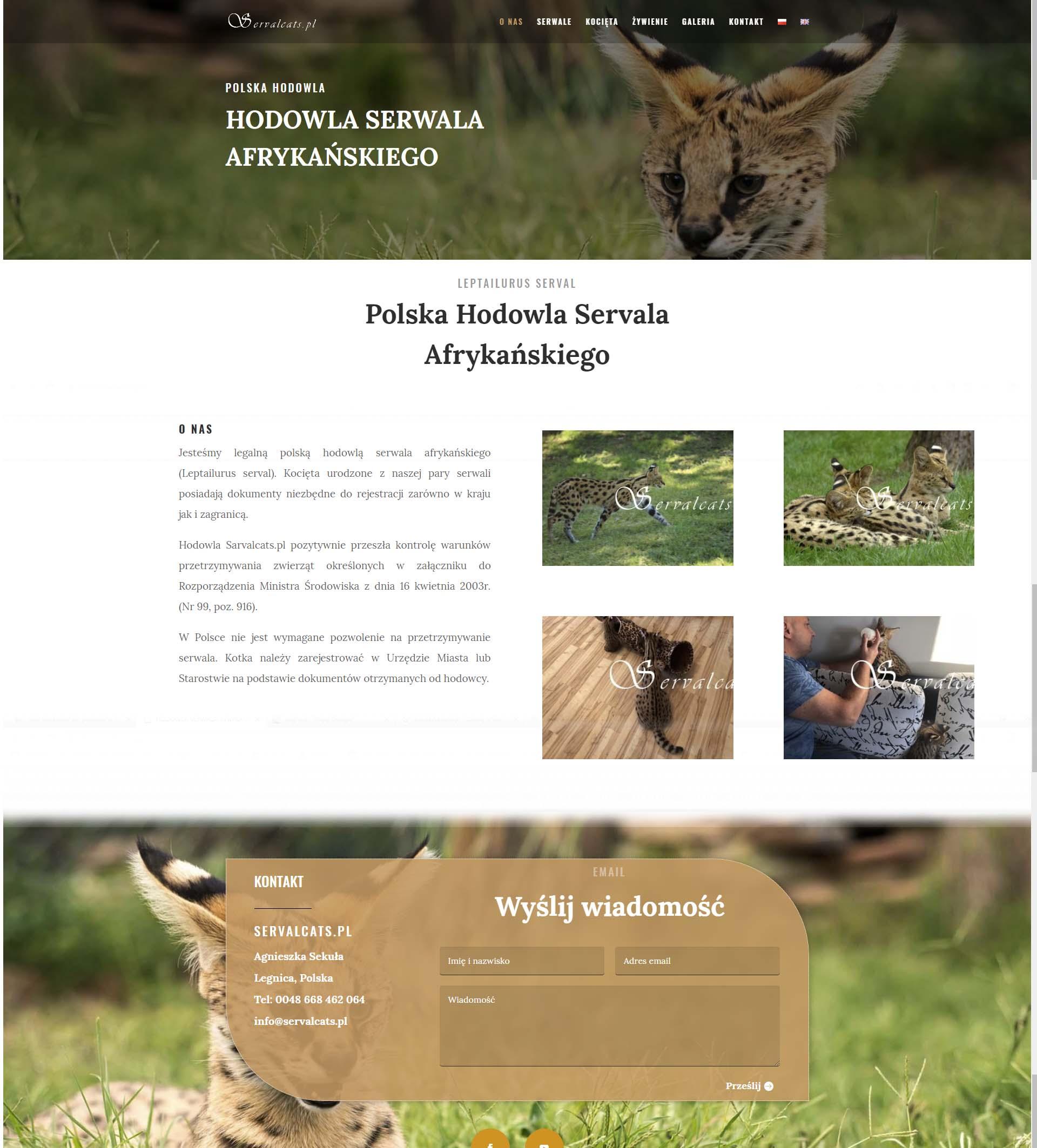 servalcats - Nasze realizacje
